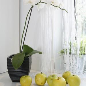 W salonie dekorację okna są czarne firanki, w kuchni – dla przeciwwagi – ta sama firanka pod względem formy, ale w białej wersji kolorystycznej. Strefa kuchenna ma mały metraż, postawiono więc na jasne kolory i dużo światła. Fot. Bartosz Jarosz.
