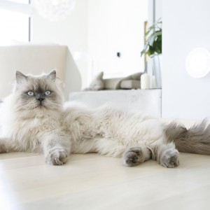Kot, domowa maskotka, potrafi czasem niezauważalnie wtopić się w tło. A to za sprawą kolorystyki zbliżonej do otoczenia. Fot. Monika Filipiuk.
