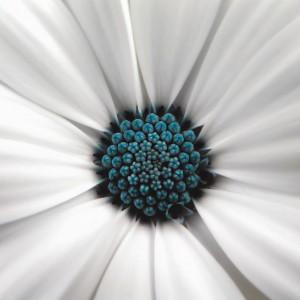 Wrażenie głębi na ścianie osiągniemy za pomocą realistycznych fototapet. Sprawdzą się motywy krajobrazowe, ale równie dobrze posłużą nam wzory z przeskalowanymi roślinami. Efekt zaskoczenia gwarantowany! Na zdjęciu: fototapety z motywami kwiatów, sprzedaż: Mamita.pl.