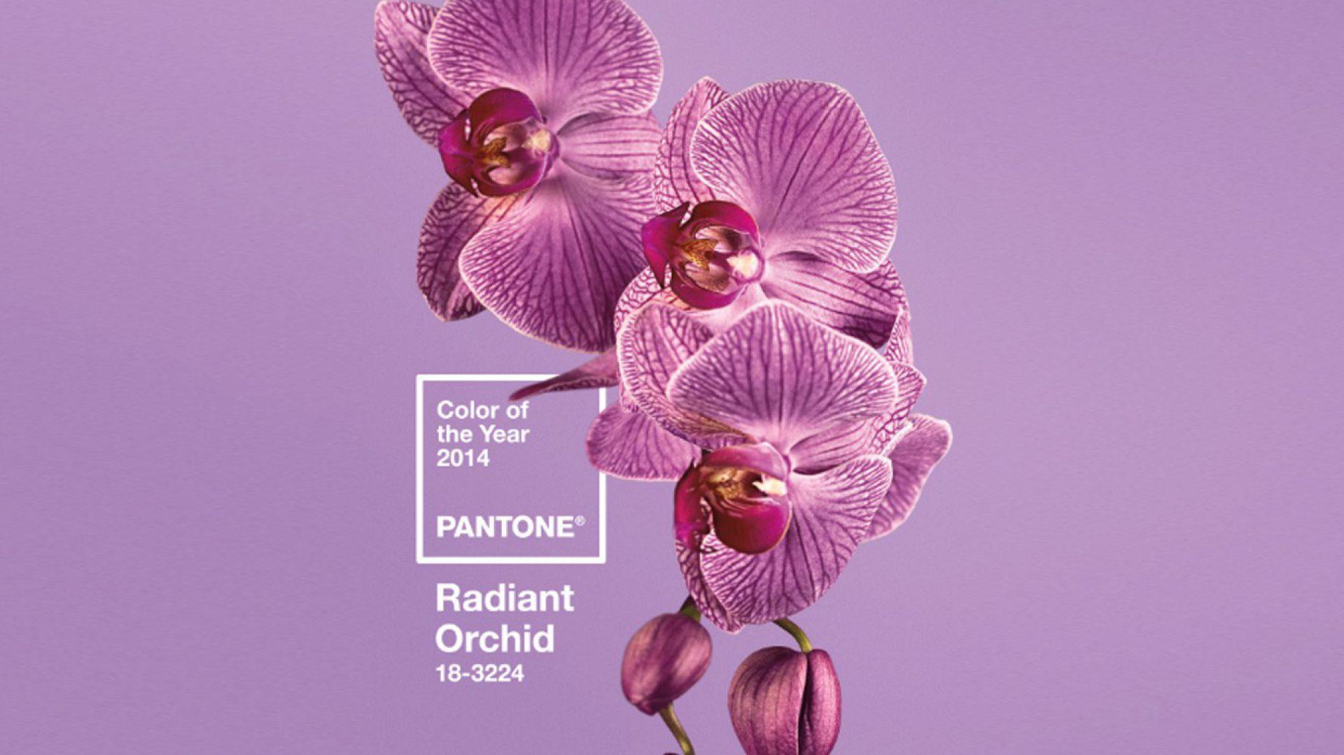 Radiant Orchid. Fot. Instytut Pantone.