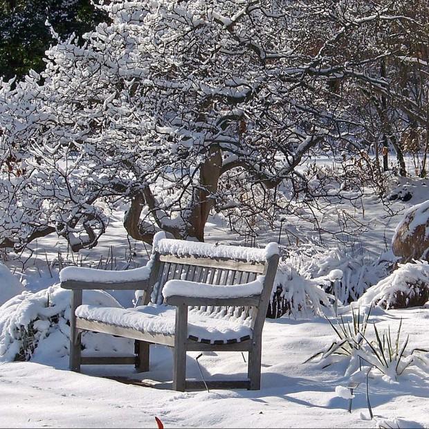 Baśń zimowa w ogrodzie
