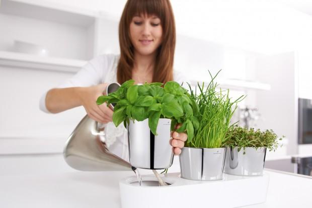 To dzięki nim mięta, kolendra czy bazylia będzie nie tylko świeżym dodatkiem do naszych potraw, ale stanie się także efektowną dekoracją kuchni. Zobaczcie najciekawsze doniczki i pojemniki na zioła.