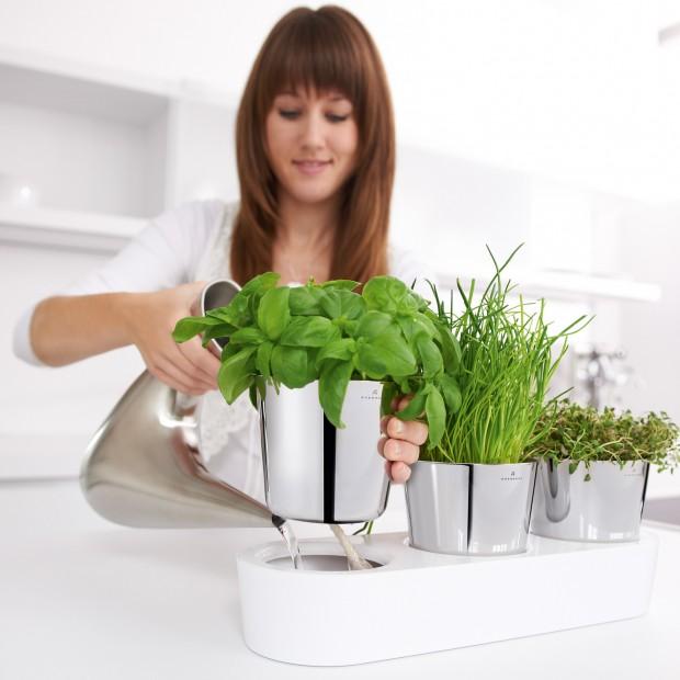 Doniczki na zioła: do każdej kuchni