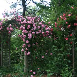 Fot. American Gardening.