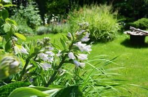 Ogród prywatny w naturalnym stylu.