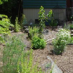 Stopniowe dosadzanie różnych gatunków roślin, bez wcześniejszego planu prowadzi do chaosu i wrażenia bałaganu. Fot. Farmerscrub.