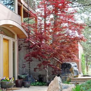 Właściciele nie przewidzieli, rozrostu korony drzewa i posadzili je zbyt blisko elewacji. Fot. Jocelynsgarden.