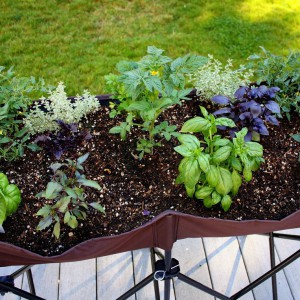Fot. Gardenshowblog.