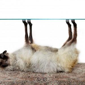 Armin Blasbichler to austriacki projektant znany z niekonwencjonalnego i kontrowersyjnego podejścia do designu. Stolik z kolekcji Orson (wykonany z wypchanej owcy) bardzo dobrze pokazuje, dlaczego. Fot. Armin Blasbichler Studio.