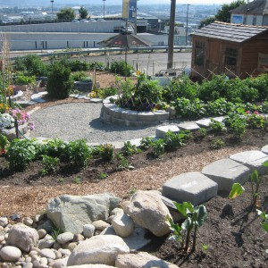 Fot. The Tacoma Kitchen Garden.