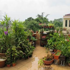Fot. Aaron\'s Gardening