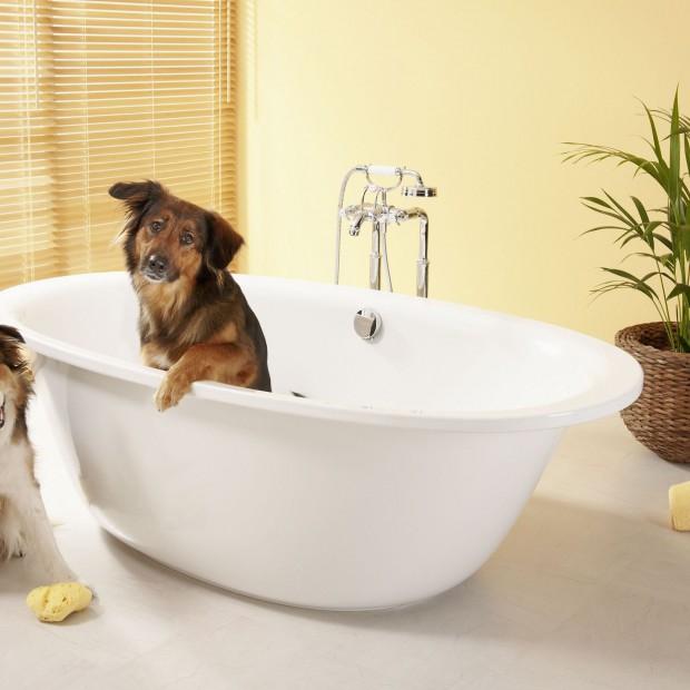 Dzisiaj obchodzimy Światowy Dzień Psa. Twój najlepszy przyjaciel w łazience