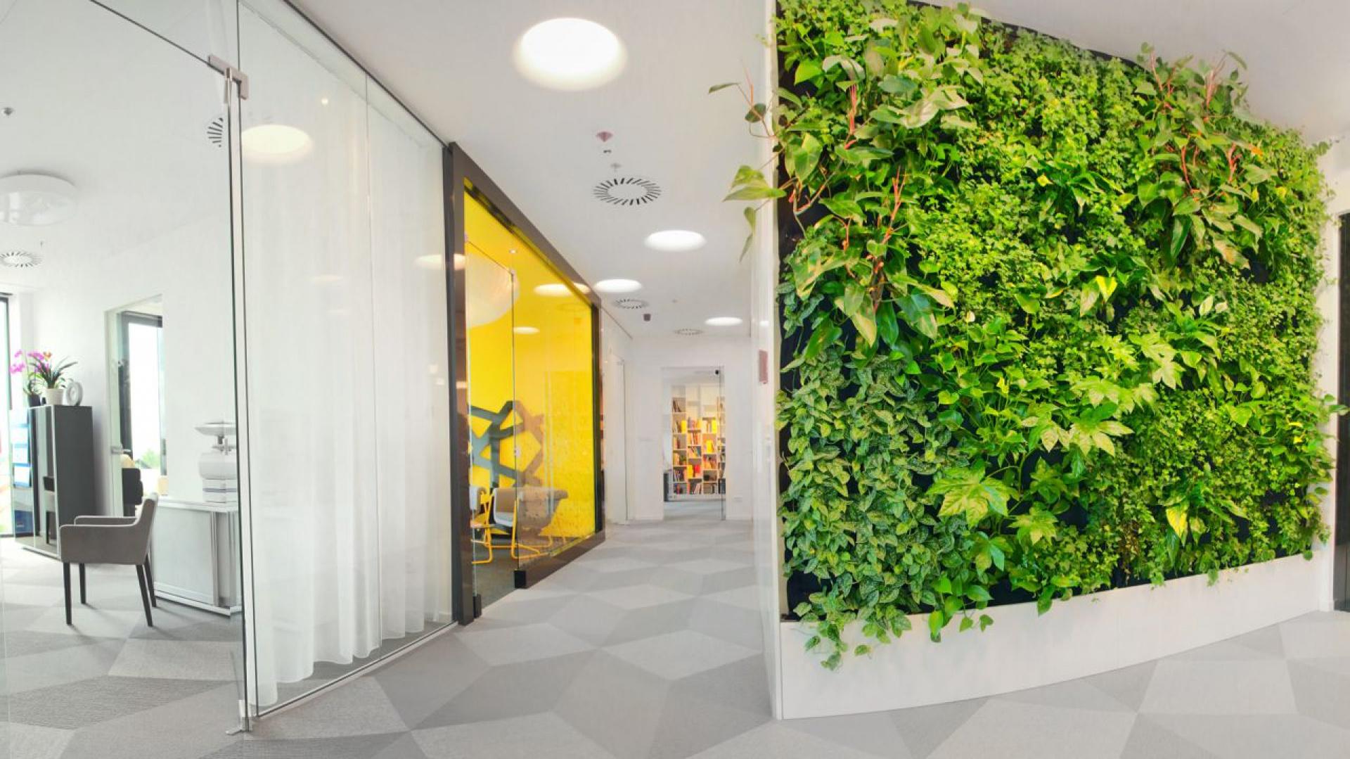 Ciekawostką biura jest ściana zieleni w recepcyjnej części biura. Fot. ARS