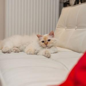 W salonie stoi wygodna kanapa. Kot to potwierdza. Fot. Decoroom.