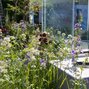 Kolorowe, lekkie kwiaty kontrastują z ciężką, chropowatą strukturą betonu. W ogrodzie zastosowano także szklane tafle, które dodają całej kompozycji lekkości i dzielą ją na poszczególne strefy. Proj. LDC Design. Fot. RHS Chelsea Flower Show.