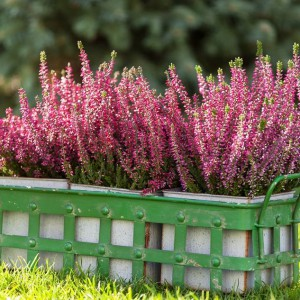 Metalowe osłonki do kwiatów z praktycznymi uchwytami w zielonym, przecieranym kolorze. Fot. Sodo.