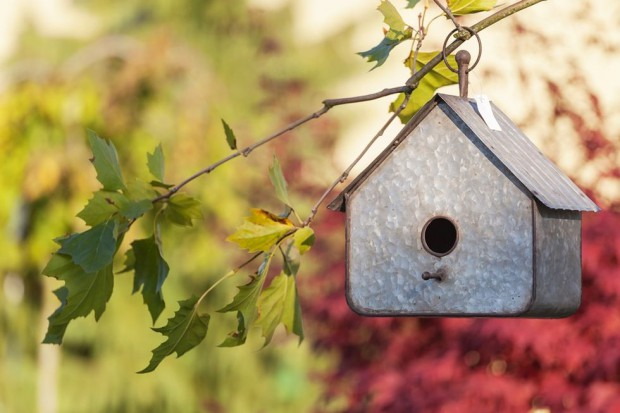 Domki, karmniki dla ptaków