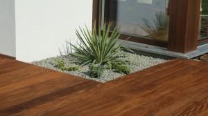 Yuka jako roślina architektoniczna.