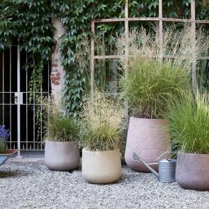 Rośliny umieszczone w doniczkach podczas chłodnych dni możemy przenieść do domu. Fot. Serralunga.