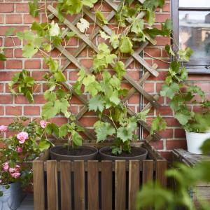 Krata ogrodowa połączona z miejscem na doniczki to rozwiązanie, które świetnie sprawdzi się także na niewielkiej przestrzeni tarasu czy balkonu. Krata umożliwia podtrzymanie pnączy zielonych roślin. Fot. IKEA.