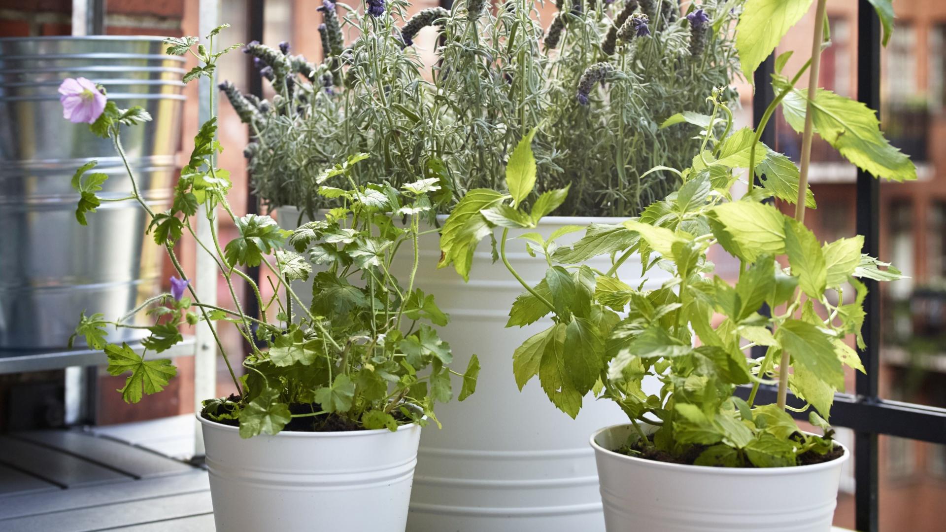 Rośliny We Wnętrzu Pomysłowe Donice I Doniczki