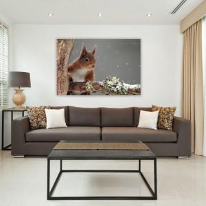 Urocza ruda wiewiórka wygląda, jakby figlarnie zaglądała do wnętrza salonu. W towarzystwie takiego zwierzaka czas mija zdecydowanie przyjemniej. Obraz do nabycia na Demural, cena od 29,40 zł - w zależności od rozmiaru. Fot. Demural.