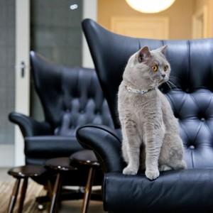 Mieszkanie spełni wymagania nawet najbardziej wybrednych domowników. Projekt: Daniel Hopwood Studio. Fot. Matt Chung Photo.