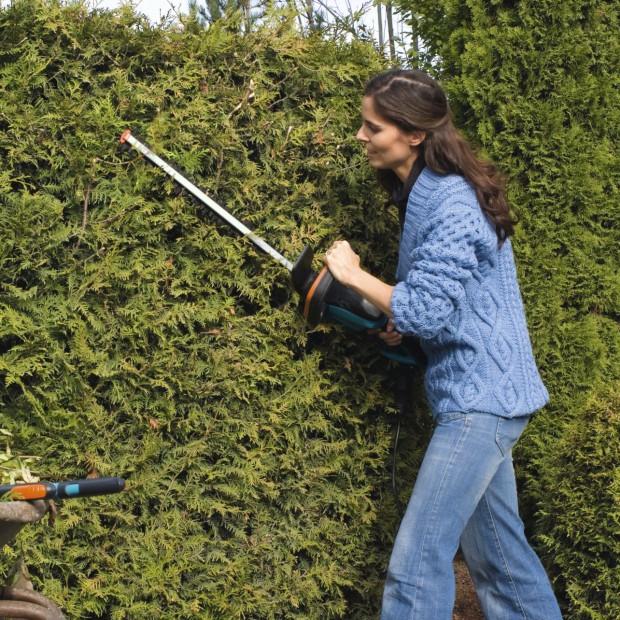 Ogród na wiosnę: przycinanie drzew i krzewów