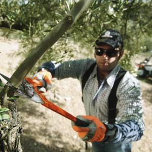 Warto też wiedzieć w jakim celu przycinamy drzewa: pielęgnacyjnym, formującym, prześwietlającym, korygującym lub odmładzającym, czy też stosujemy po prostu cięcie techniczne. Fot. Husqvarna.