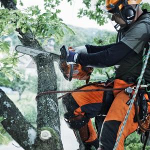 Cięcia techniczne stosujemy wówczas, gdy gałęzie zasłaniają okna, drzwi lub stwarzają niebezpieczeństwo zetknięcia się z przewodami pod napięciem. Taki zabieg można wykonywać o każdej porze roku. Fot. Husqvarna.