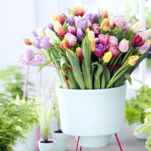 Kompozycja z kolorowych tulipanów w ciekawym wazonie będzie stanowić barwną dekorację każdego wnętrza. Fot. Flower Council.