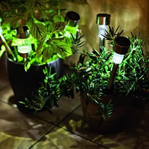 Lampki solarne cieszą się dużą popularnością. Najczęściej używane są do dekoracji rabatek, donic i  ścieżek w ogrodzie. Lampki widoczne na zdjęciu można kupić w sklepach sieci Castorama. Fot. Castorama.