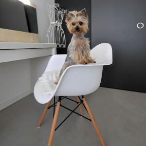 Pieski właścicieli również zostały uwzględnione przy projektowaniu wygodnego wnętrza. Projekt: TK Architekci. Fot. Wojciech Szwej, Jose Teixeira.