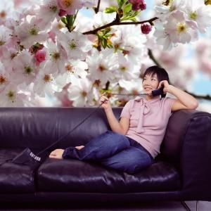 Fototapeta z motywem kwitnącego drzewa wiśni w skali marko. Fot. Castorama.