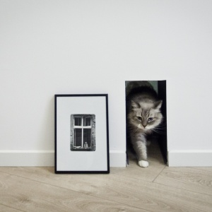 W mieszkaniu znalazły się także rozwiązania stworzone z myślą o czworonożnym domowniku. Projekt: Superpozycja architekci. Fot. Przemek Skóra.