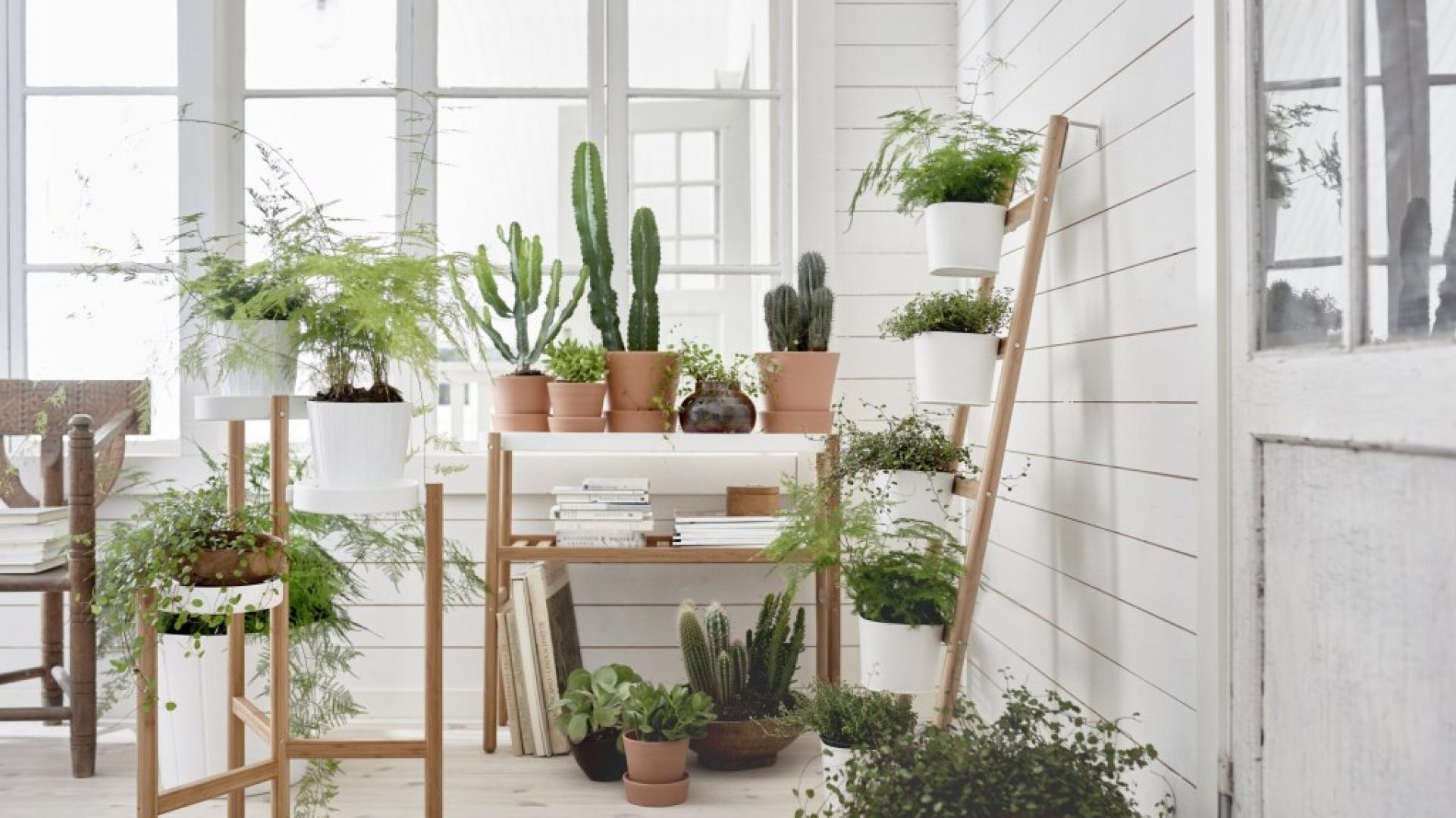 Kolekcja ceramicznych doniczek to nowość ze sklepów IKEA. Fot. IKEA.