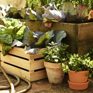 Ceramiczne doniczki świetnie się sprawdzą także na balkonie, tarasie czy w ogrodzie. Fot. IKEA.
