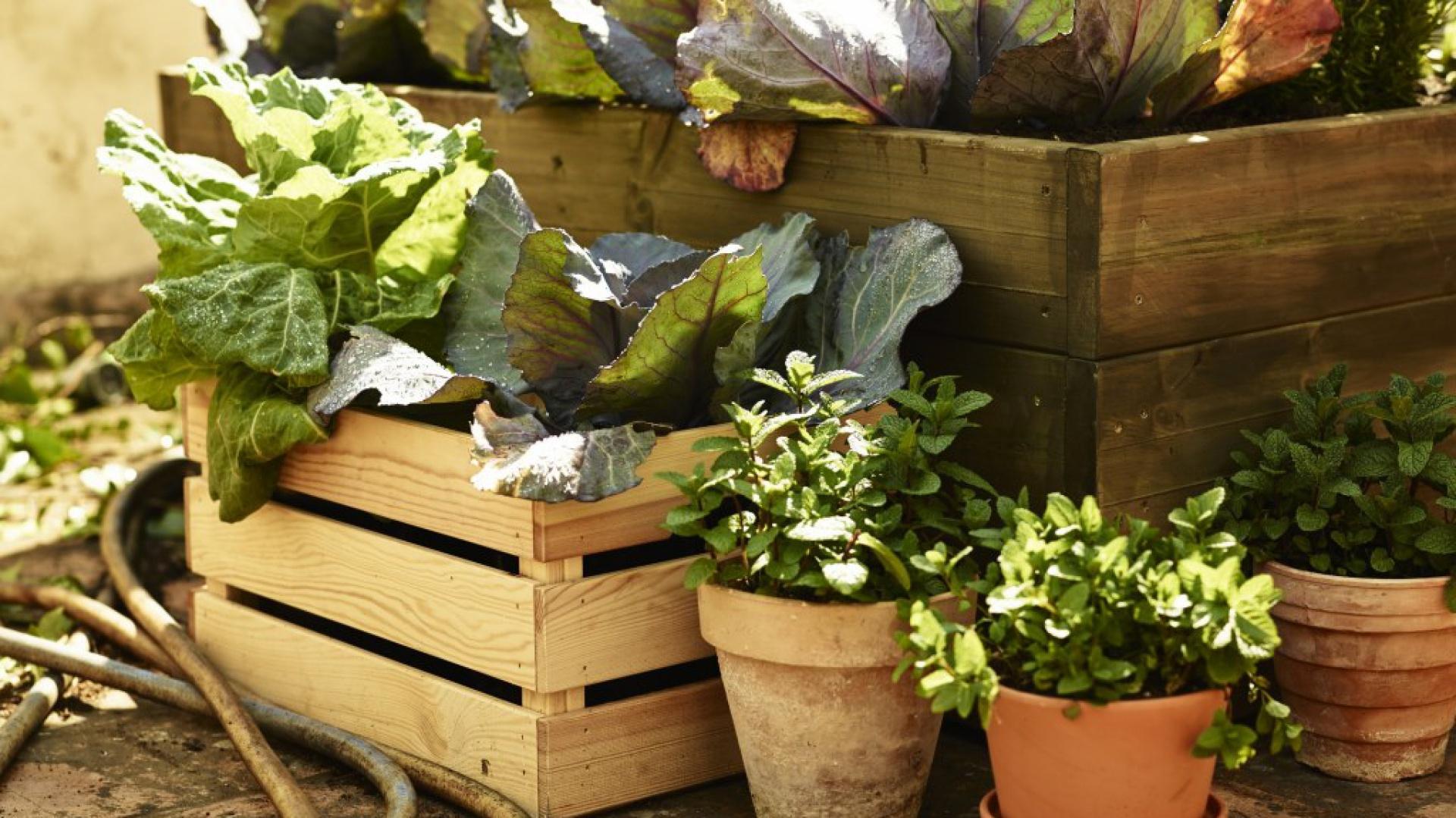 Rośliny W Domu W Takich Doniczkach Naprawdę Rozkwitną