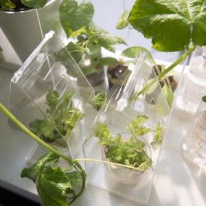 Miniszklarnie - świetny sposób na świeże zioła czy warzywa nawet na mikroskopijnym balkonie. Fot. IKEA.