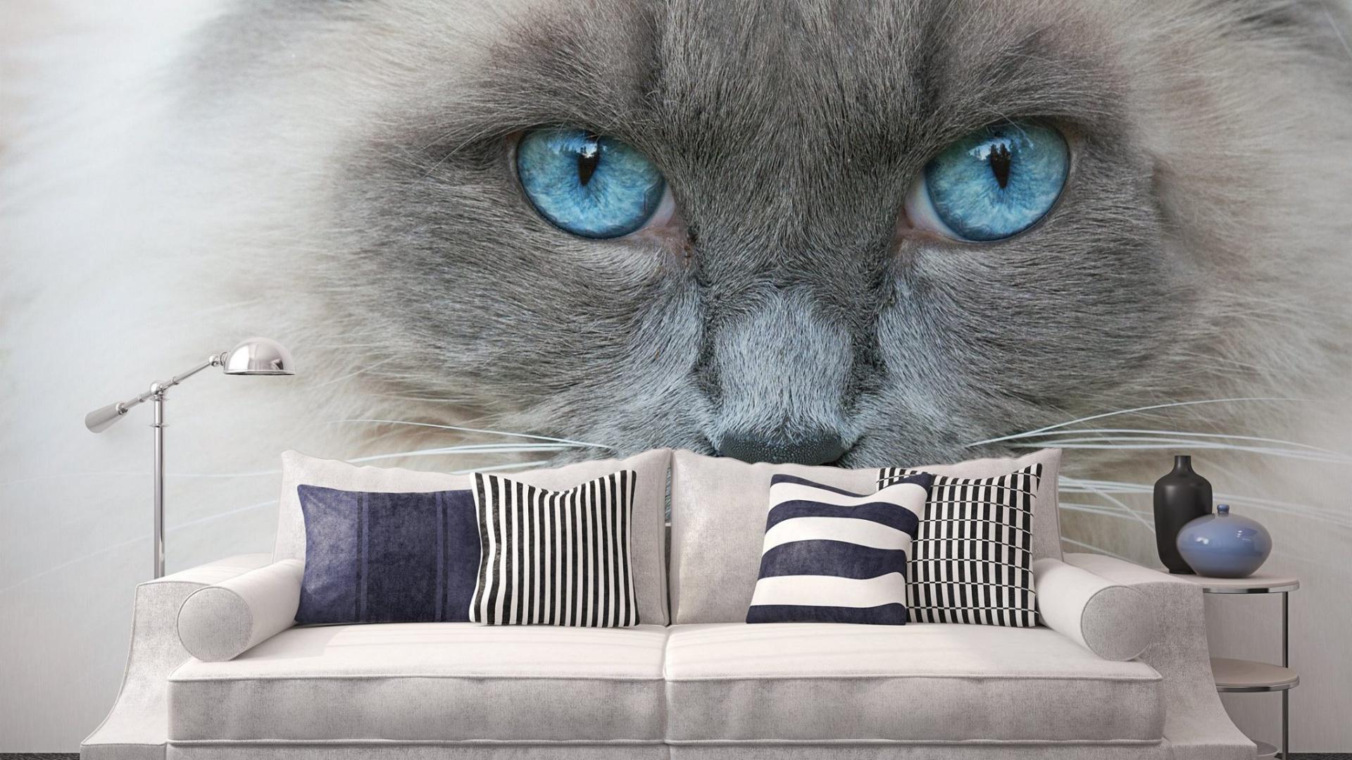 Dekorując ścianę w salonie fototapetą możemy sprawić, że będzie na nas z niej spoglądał... kot o niebieskich oczach. Fot. Minka