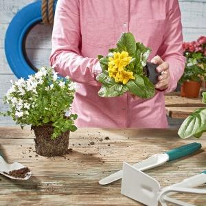 Krok 5: Przygotuj rośliny do posadzenia w kwietnik. Świetne będą pnącza, kwiaty i rośliny wiszące. Fot. Praktiker