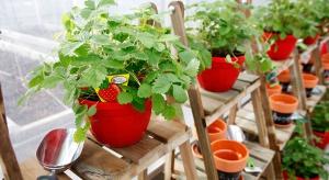 Smakowite Rośliny to nowa kolekcja sadzonek warzyw, ziół i owoców stworzona specjalnie na miejskie balkony.
