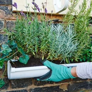 Krok szósty – sadzenie roślin  Rozmaryn, roszponka, a może lawenda? W pionowym ogrodzie można posadzić właściwie wszystko – jedyną zasadą jest dopasowanie roślin do warunków atmosferycznych charakteryzujących daną porę roku. Warto również pamiętać, by nie sadzić kwiatów czy ziół zbyt ciasno – wszystkie wymagają przestrzeni, by móc się rozwijać. Rynna nie jest głęboka – dlatego najlepiej inwestować w rośliny rosnące pionowo. Ziemię wypełniającą rynny można wzbogacić preparatami zawierającymi składniki odżywcze. Fot. Bosch