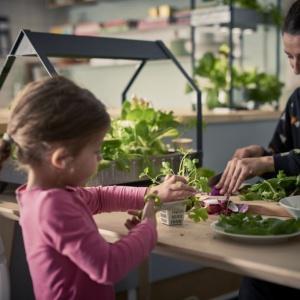 Zestaw do domowych upraw KRYDDA/VÄXER to wiosenna nowość od IKEA.