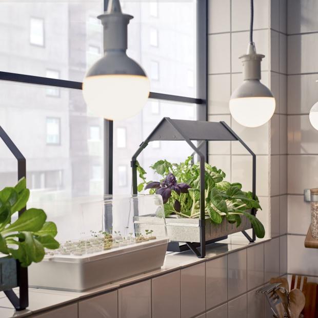 Uprawiamy własne warzywa w domu: to prostsze niż myślisz