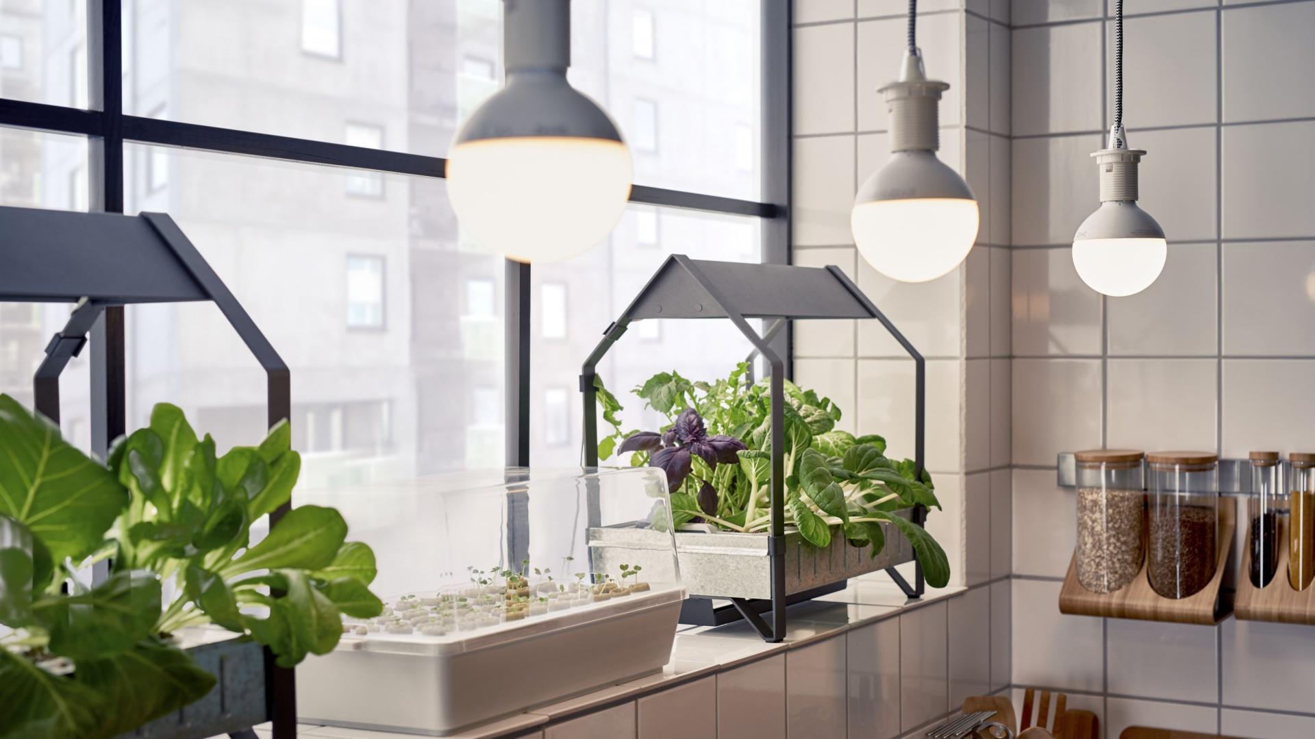Zestaw do domowych upraw KRYDDA/VÄXER IKEA, fot. materiały prasowe