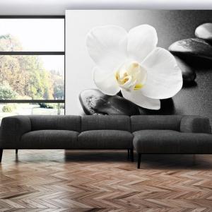 Fototapeta w klimacie zen z eleganckim białym kwiatem na tle czarnych kamieni. Fot. Dekowizja