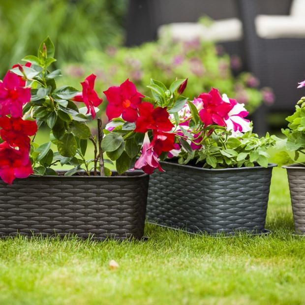 Piękny balkon - zadbaj o rośliny
