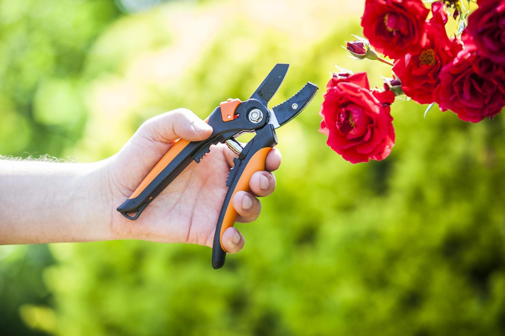 Sekator ogrodowy Strong marki Verdenia, dł. 21 cm, ze stali nierdzewnej i tworzywa, posiada krótkie ostrze i wygodny uchwyt. Przeznaczony do cięcia pędów lub innych części roślin o niewielkiej grubości (do 15 mm). Niewielki i lekki, można go używać jedną ręką. Cena 32,73 zł. Fot. Galicja dla Twojego domu