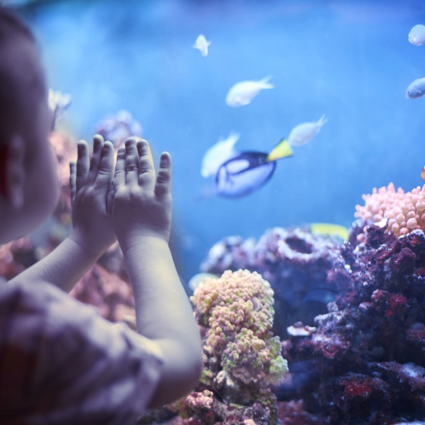 Kup dziecku akwarium - będzie lepszym uczniem!